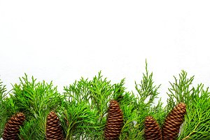 White Christmas background with natural decor. Border of conifer