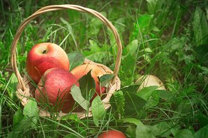 Ripe apples in basket on the grass, selective focus.