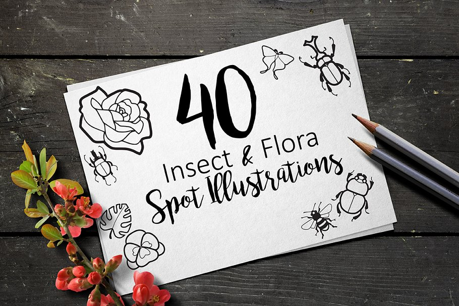 Insect and Flora illustrations