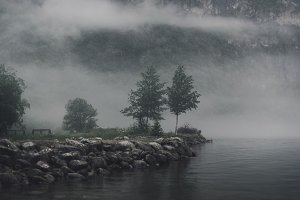 Treest at a foggy Lake in Norway