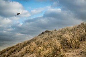 Dune flight