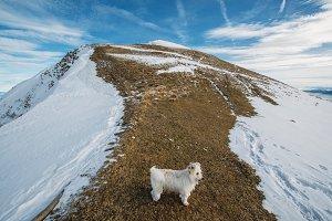 Dog on the snowy Grassland