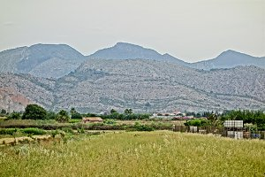 The field by the marjaleria