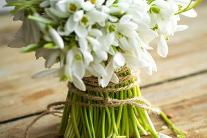 bouquet of beautiful snowdrops