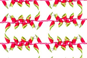 Vivid Stripes Tropical Seamless Pattern