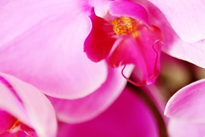 Whimsy Orchids