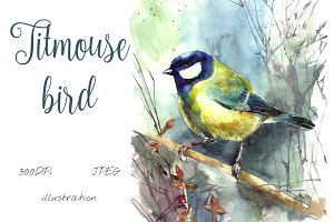 SALE! Watercolor titmouse bird