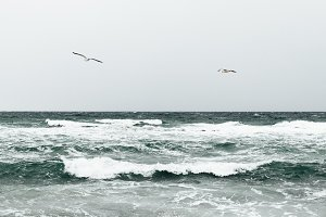 seagulls flying over the waves