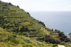 Vineyards next to the sea, Italy