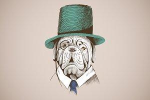 Portrait Neapolitan mastiff