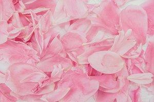 Soft pink petals texture