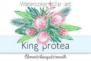 King protea. Watercolor clip art.