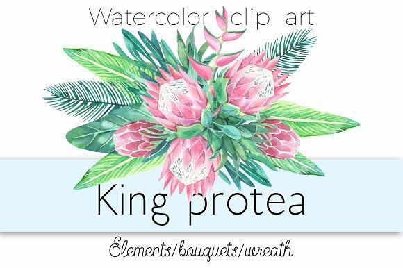 King protea. Watercolor clip art.