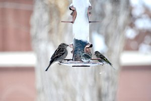 Birds at a Bird Feeder