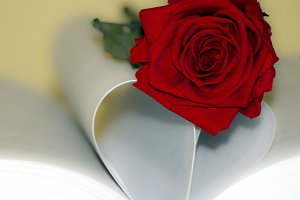 Rose and book square format