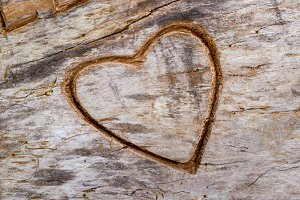 Heart engraved on an wooden trunk