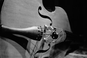 Double Bass in Black & White