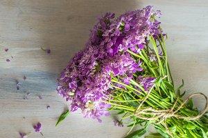 Purple summe wild flowers