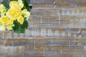 Spring Flowers on Wood