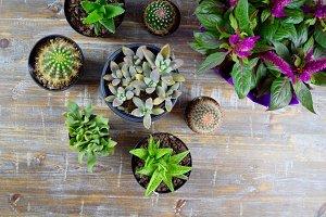 Succulent Plant Party