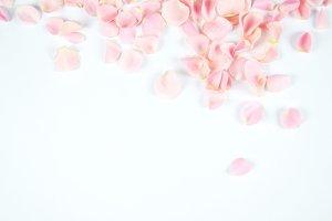 Rosette flower petals