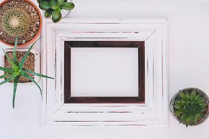 Frame with potted succulents