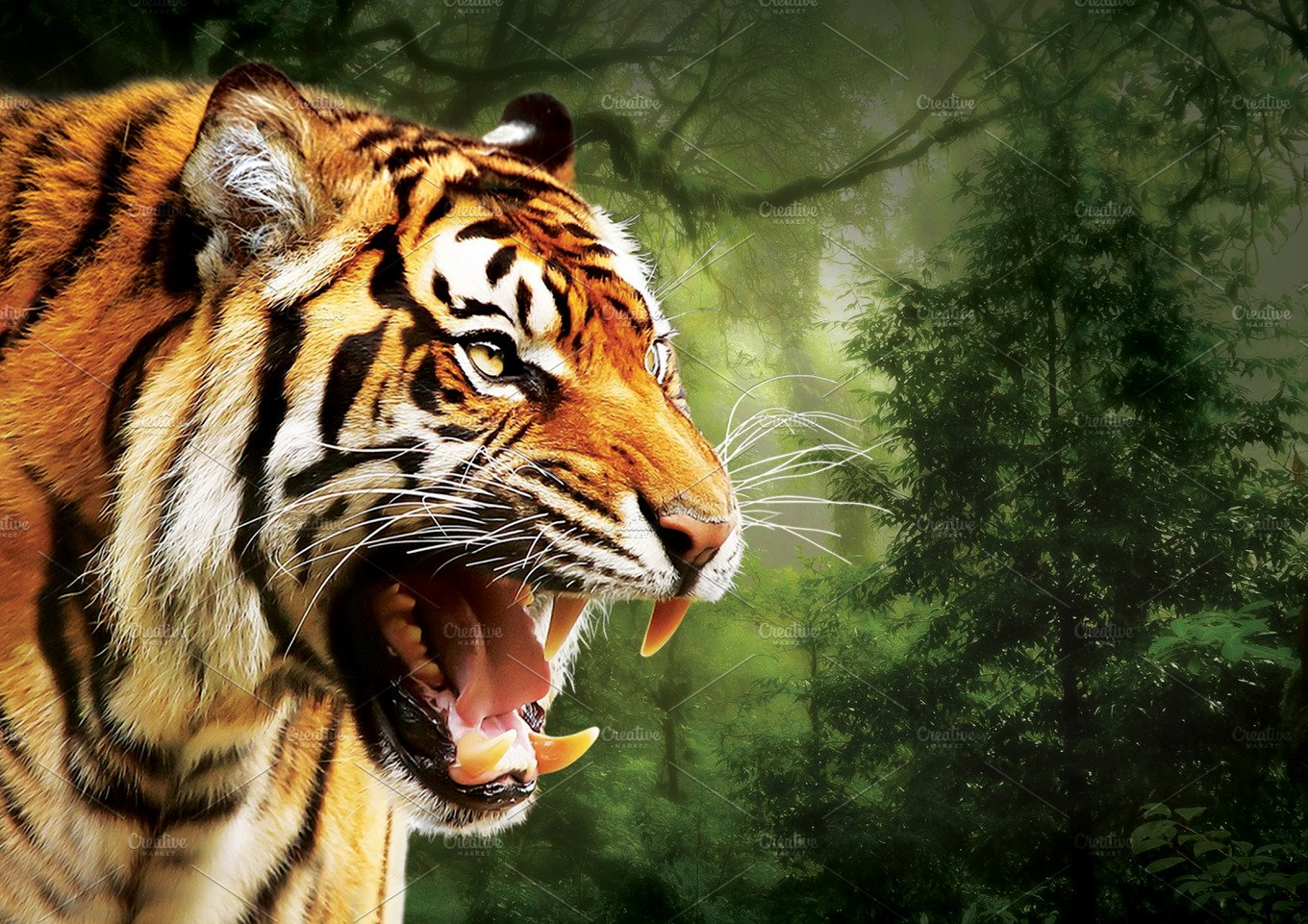Tiger face on side view 50% OFF ~ Animal Photos ~ Creative ... - photo#44