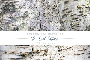 Summer Woodland ~ Tree Bark Textures