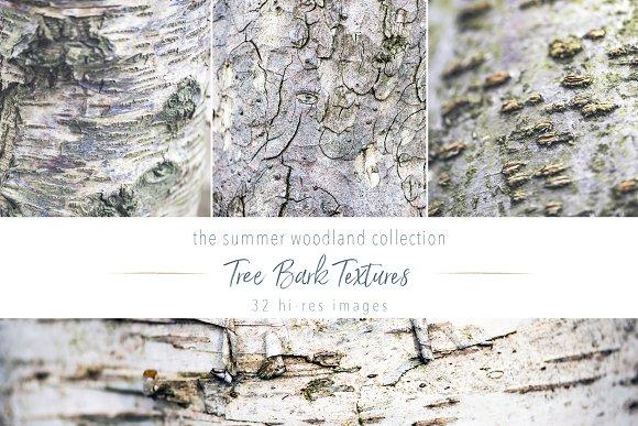 Summer Woodland ~ Tree Bark Textures