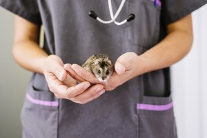 Veterinarian doctor working.