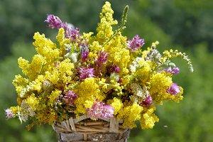 Summer, sunshine and herbs