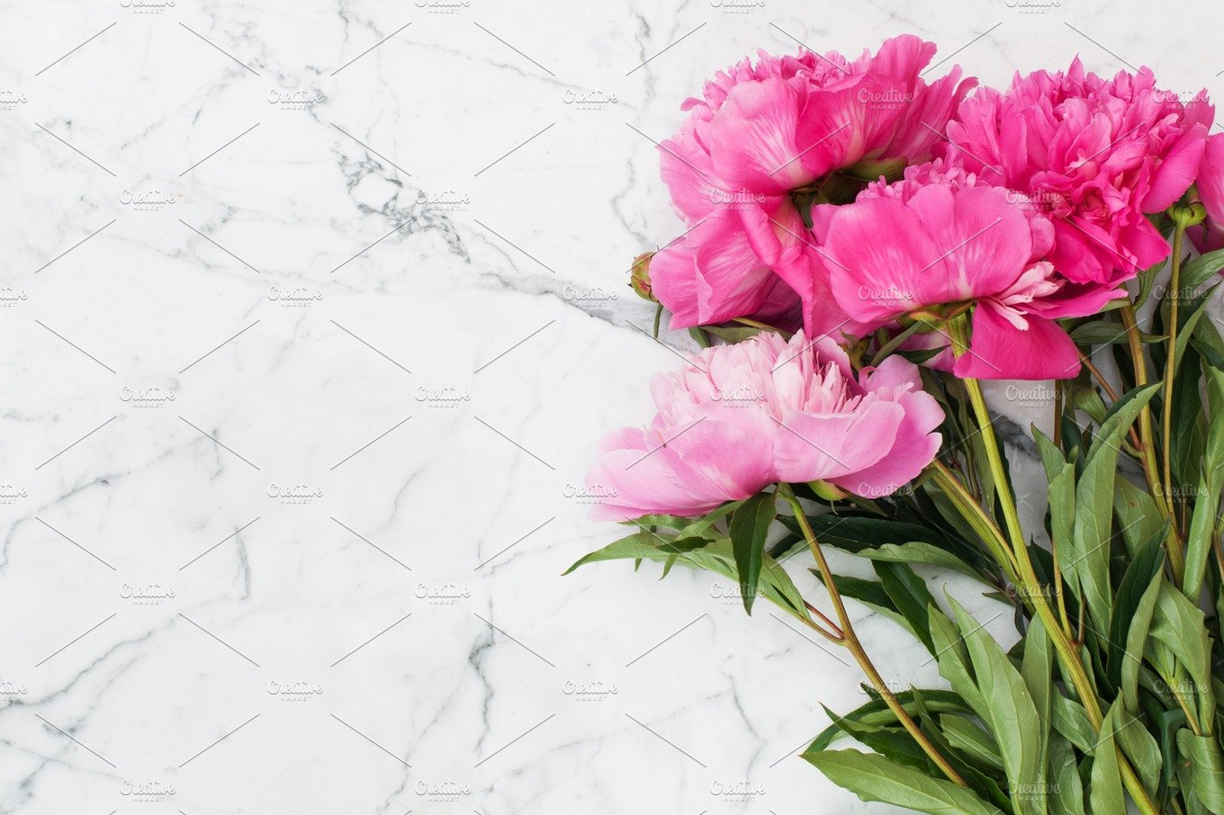 Pink Peonies On White Marble Background Nature Photos Creative