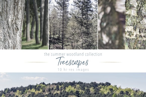 Summer Woodland ~ Treescapes