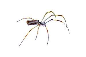 Large Legs Tropical Spider at Botanical Garden, Guayaquil, Ecuador