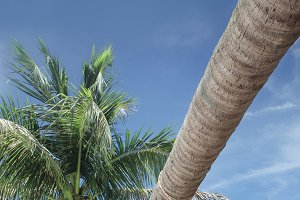 tropic holiday
