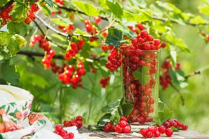 Glass with ripe red currant, soft focus background