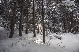 Sunrise in the winter, snowy Forest