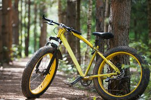 Yellow bicycle fatbike in a coniferous forest