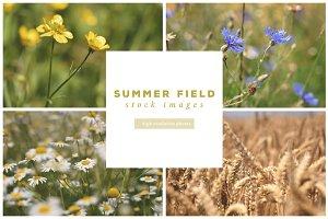 Summer Field Photo Bundle