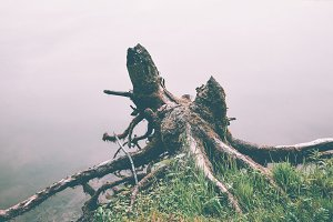 Tree stump and Fog