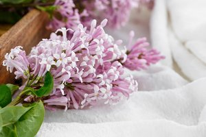 Close-up of lilac flowers on a table