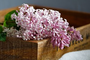 Close-up of lilac flowers in a wooden dox.