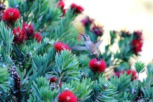 Hummingbird Abuzz