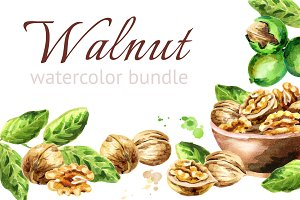 Walnut. Watercolor bundle