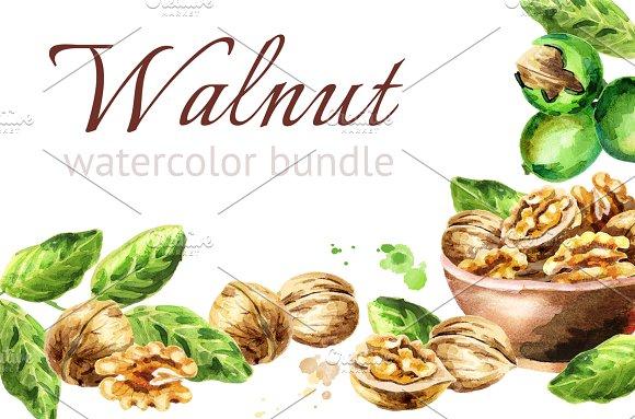 Walnut. Watercolor bundle