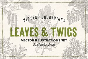 Leaves & Twigs Vintage Illustrations