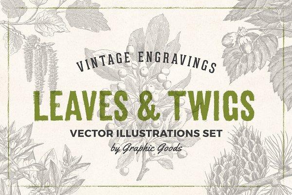 Leaves & Twigs Vintage Illustration…