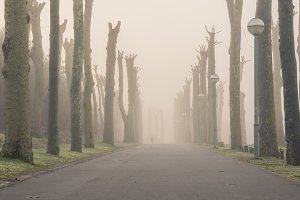 Street surrounded by trees and fog