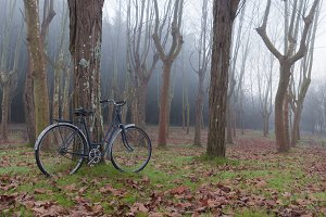 Vintage bicycle in the foggy forest