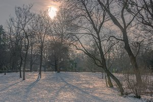 Snow in the vienna city park